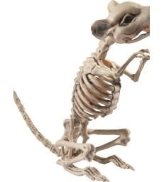 Rat Skeleton Prop, Natural