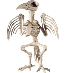 Raven Skeleton Prop, Natural