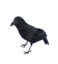 Crow, Black