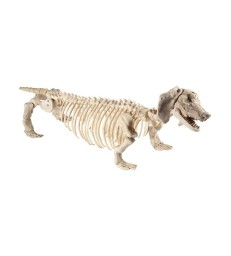 Dachshund Dog Skeleton Prop, Natural